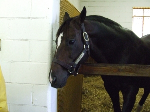 Pulpit, winner of the '97 Bluegrass Stakes, sire of multiple stakes winners as well as a very pretty pony!