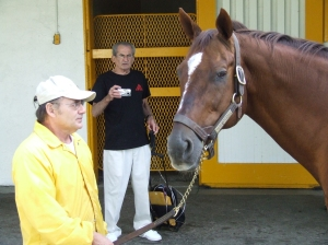 Handsome Horse Chestnut